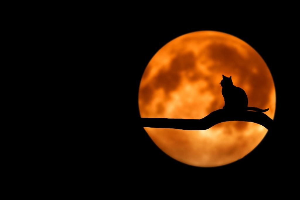 cat in front of orange moon